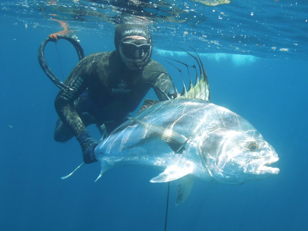 panama rooster fish