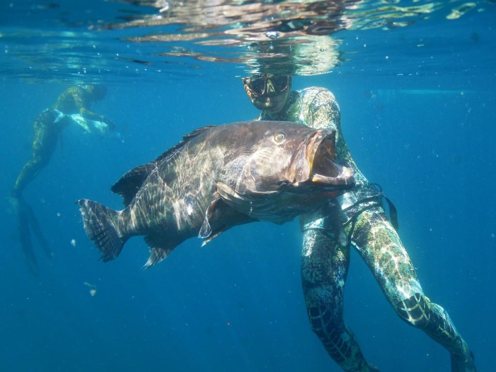 spearfishing grouper