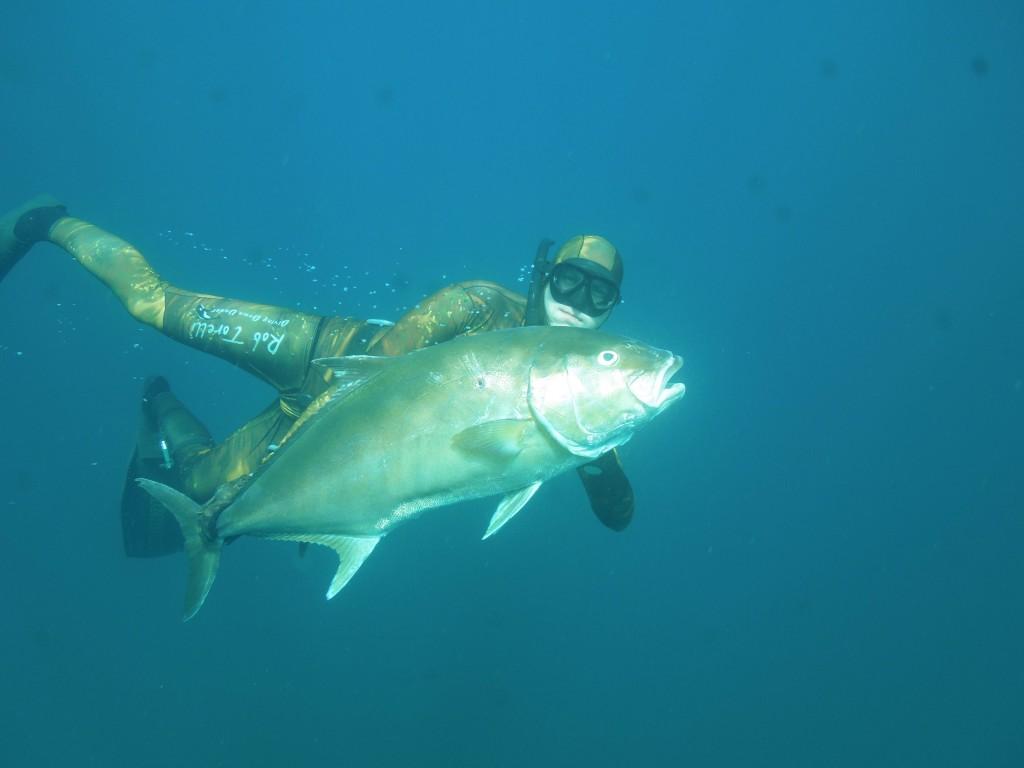 spearfishing amberjack in panama