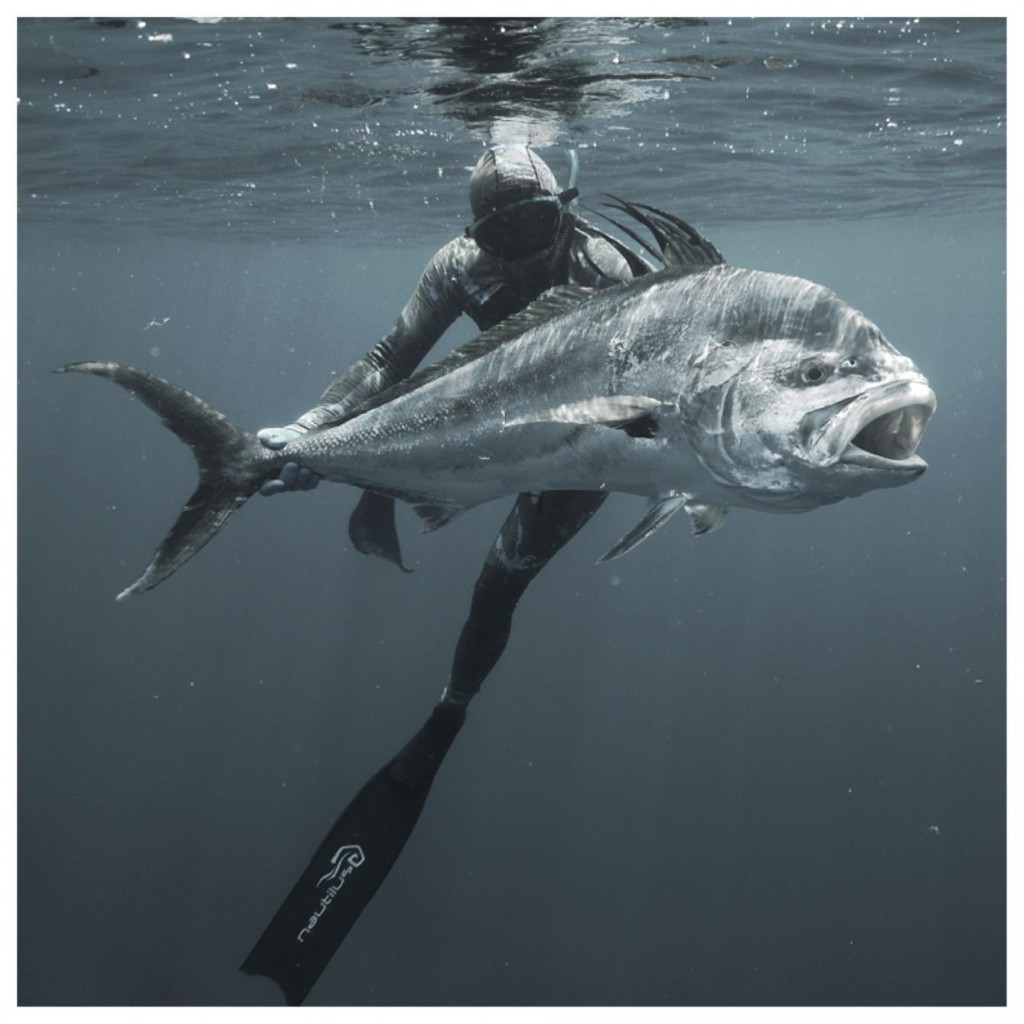 panama roosterfish
