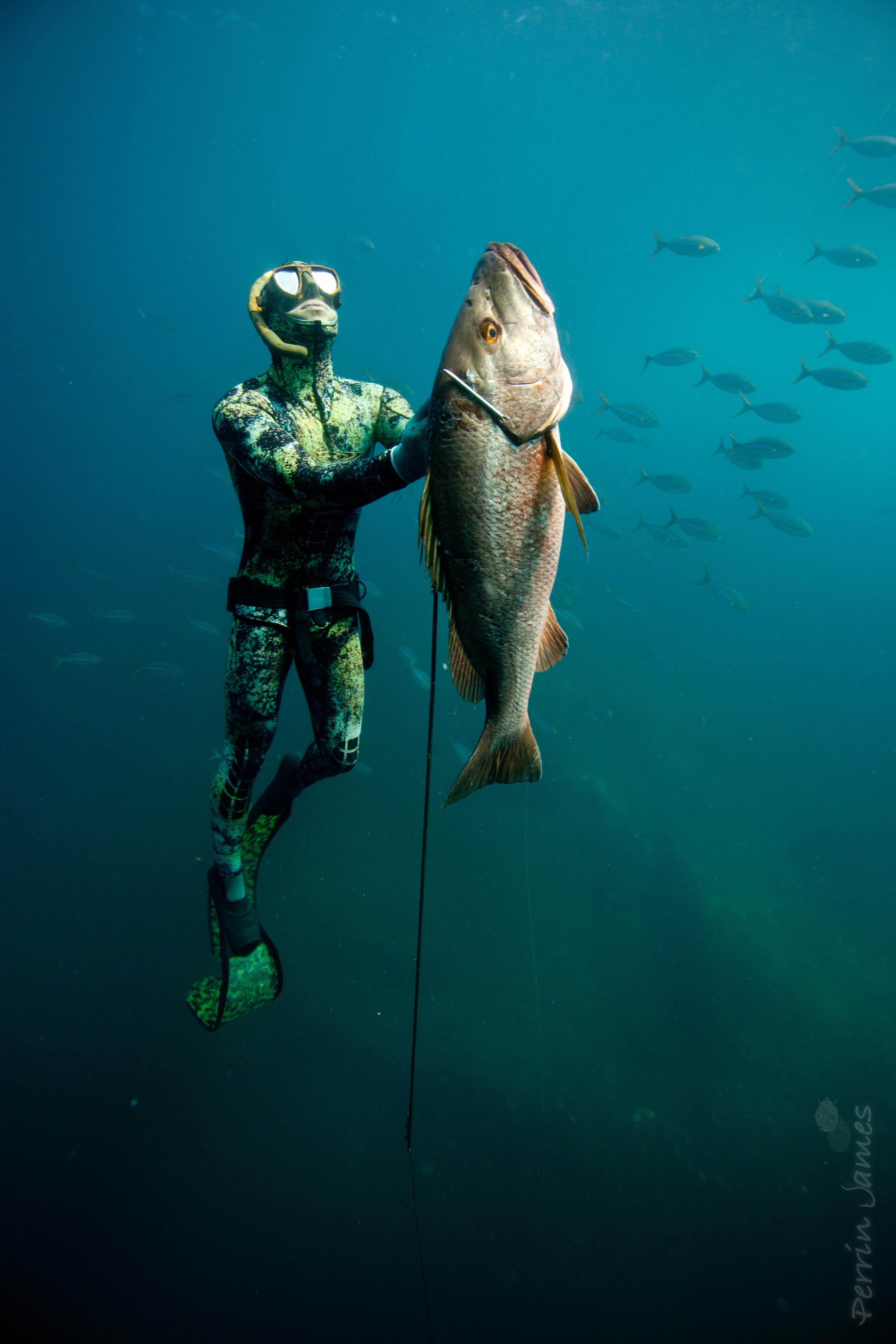 Spearfishing   Term paper Example - bluemoonadv com