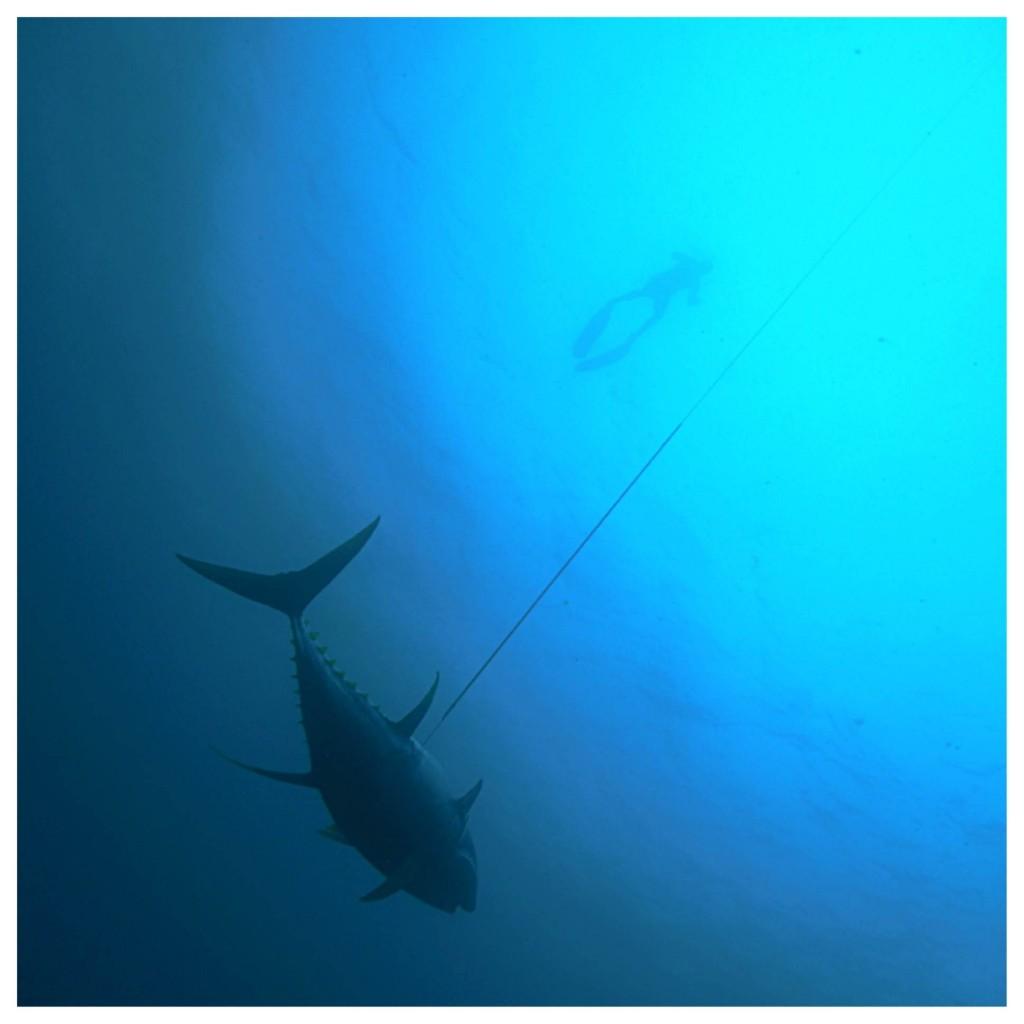spearfishing tuna depth