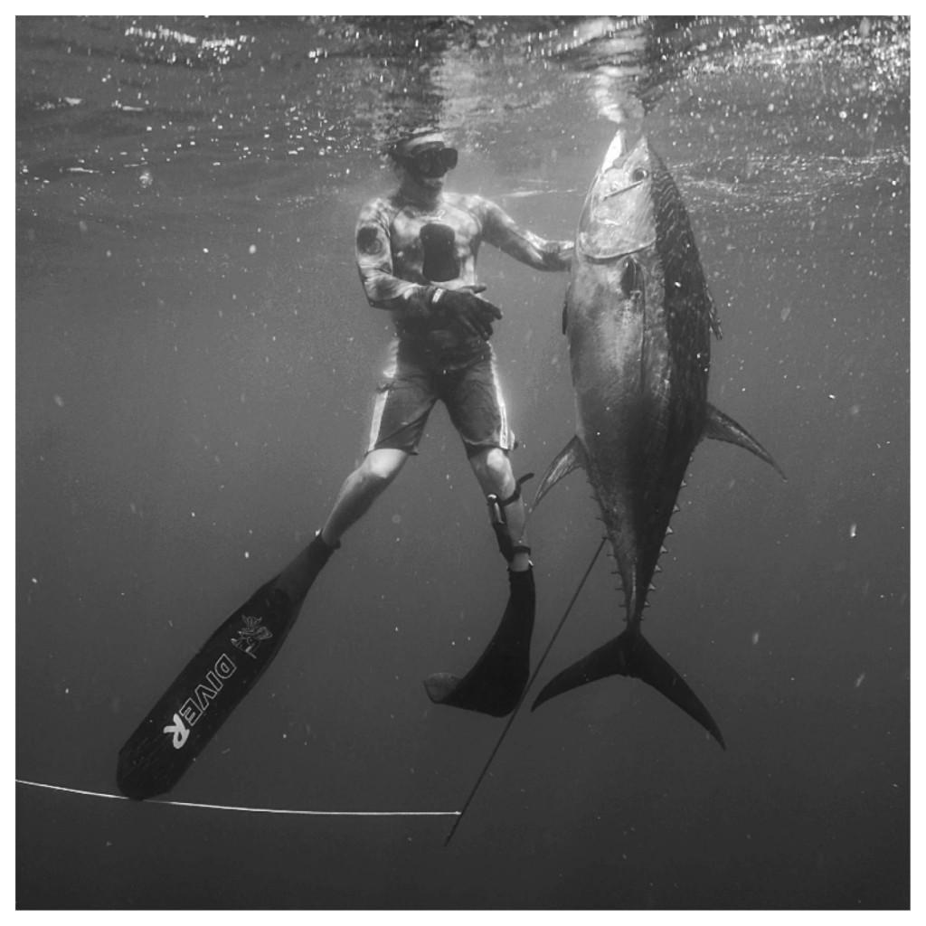 panama spearfishing tuna