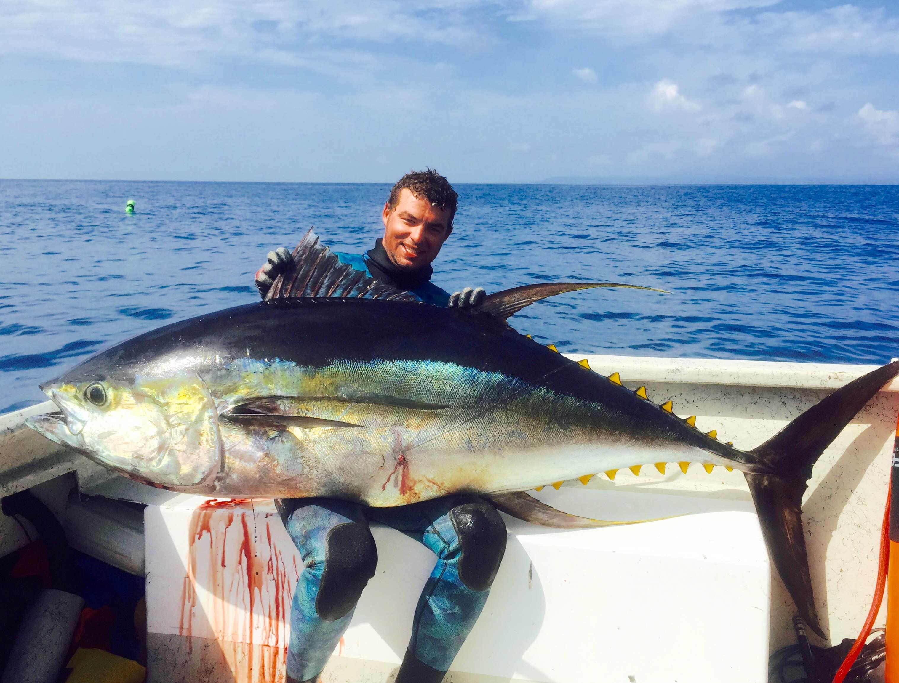 Panama spearfishing news spearfishing panama for Fishing for tuna