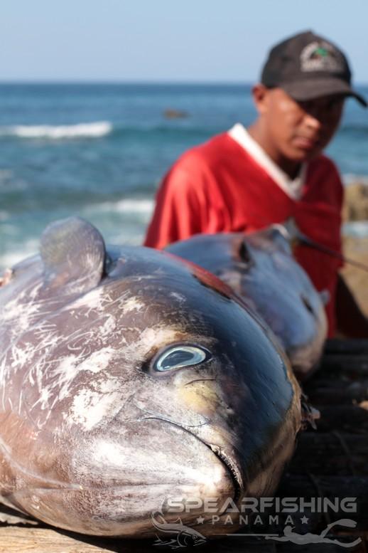 tuna cutting board