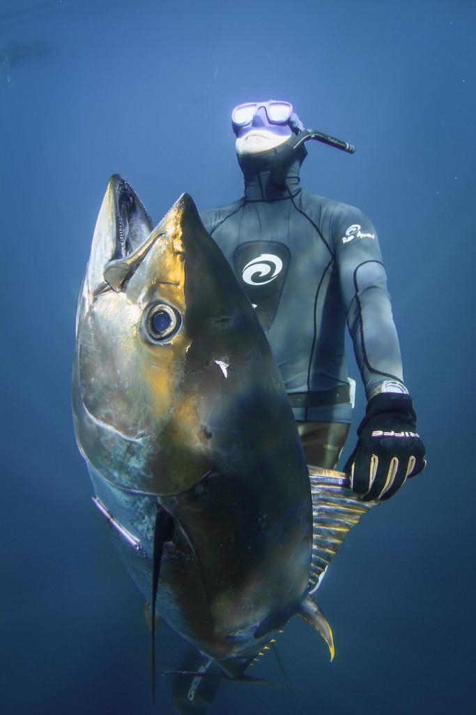 Spear tuna