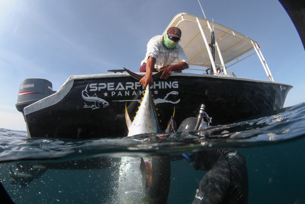 Pulling tuna into boat