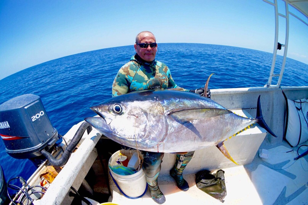 fat yellowfin