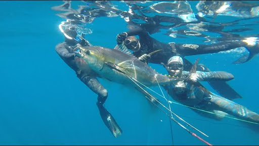 underwater-yellowfin-tuna-shot